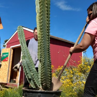 Potting_Cacti_at_the_Garden