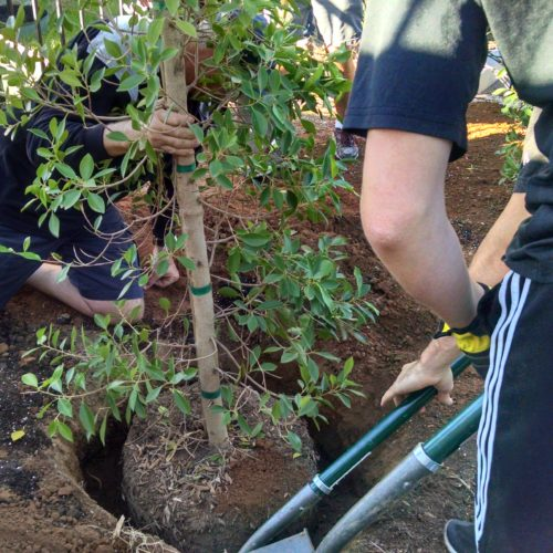 Volunteers_Plant_a_Tree